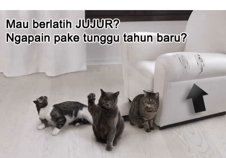 http://stellawirasto.files.wordpress.com/2010/10/kucing-latihan-jujur_bgz.jpg?w=450&h=314